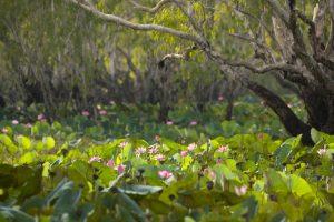 Kakadu World Wetlands Day